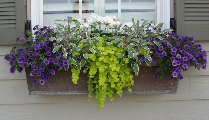 pot-fleurs-tombantes-plante-retombante-calibrachoa