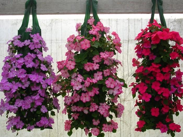 Charmant Jardin Aromatique #4: Pot-impatiens-fleurs-suspendues-plantes-retombantes-plante-tombante.jpg