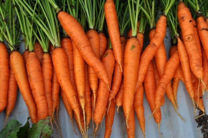 que-planter-en-septembre-carotte-semis