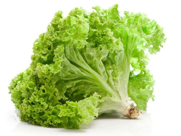 que-planter-en-septembre-legume-laitue