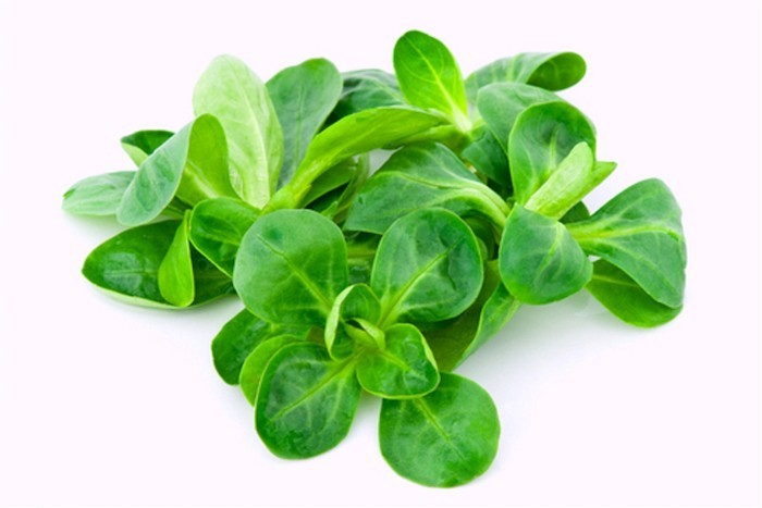 que-planter-en-septembre-legume-mache