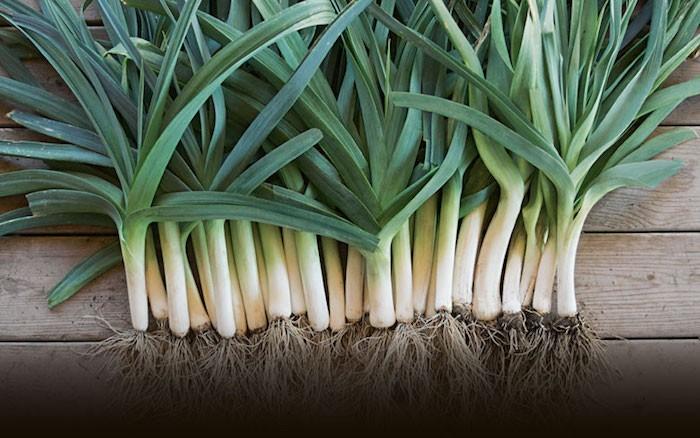 que-planter-en-septembre-legume-poireau