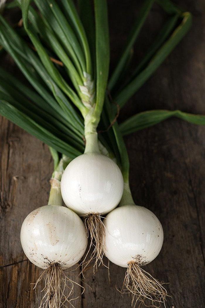 quoi-planter-en-septembre-legume-oignons
