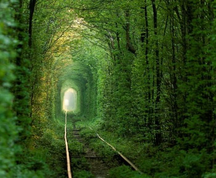 56-couloir-deco-des-arbres-verts-des-railles