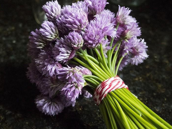 bouquet-ciboulette-fleurie-aromates-ou-plante-aromatique