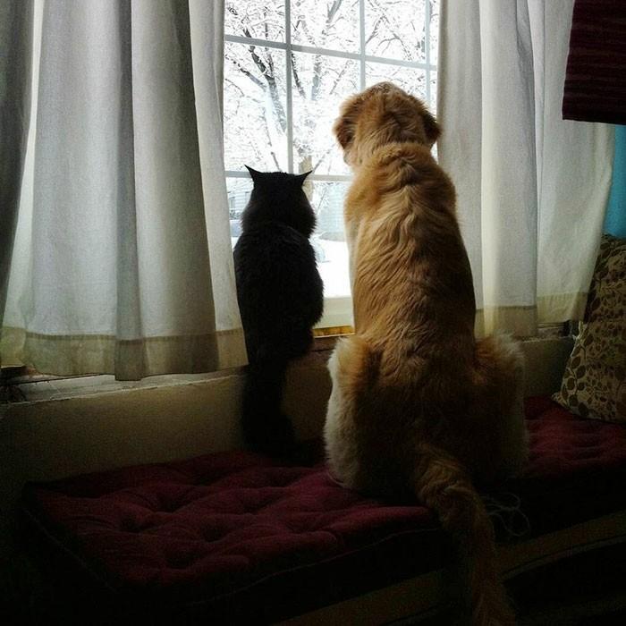 chat-et-chien-chouette-image-de-meilleure-amie