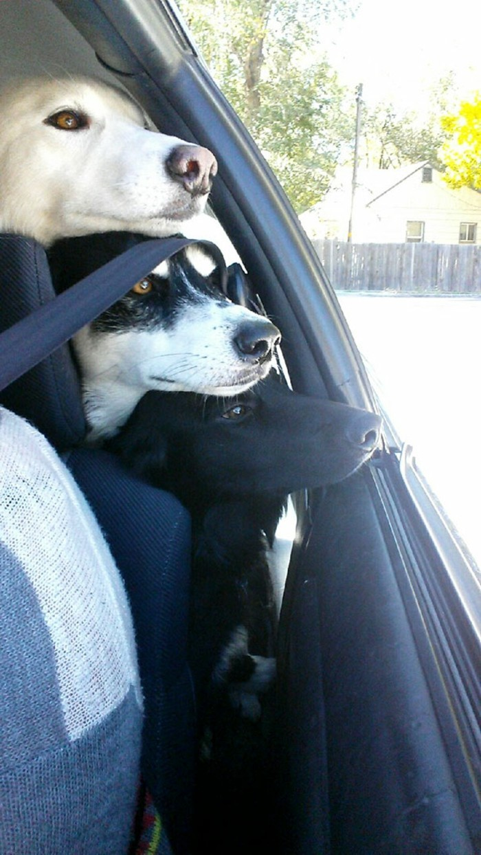 chiens-adorables-chouette-image-de-meilleure-amie