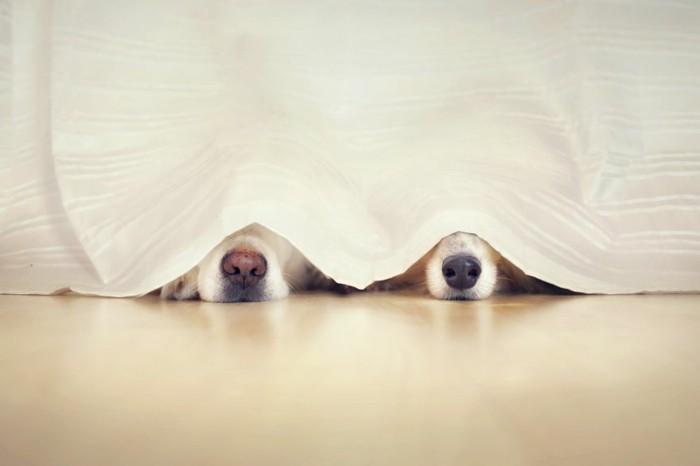 chiens-nez-trop-mignon-image-de-meilleure-amie