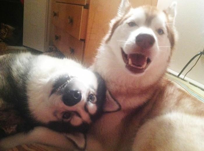 chouette-image-de-meilleure-amie-chiens