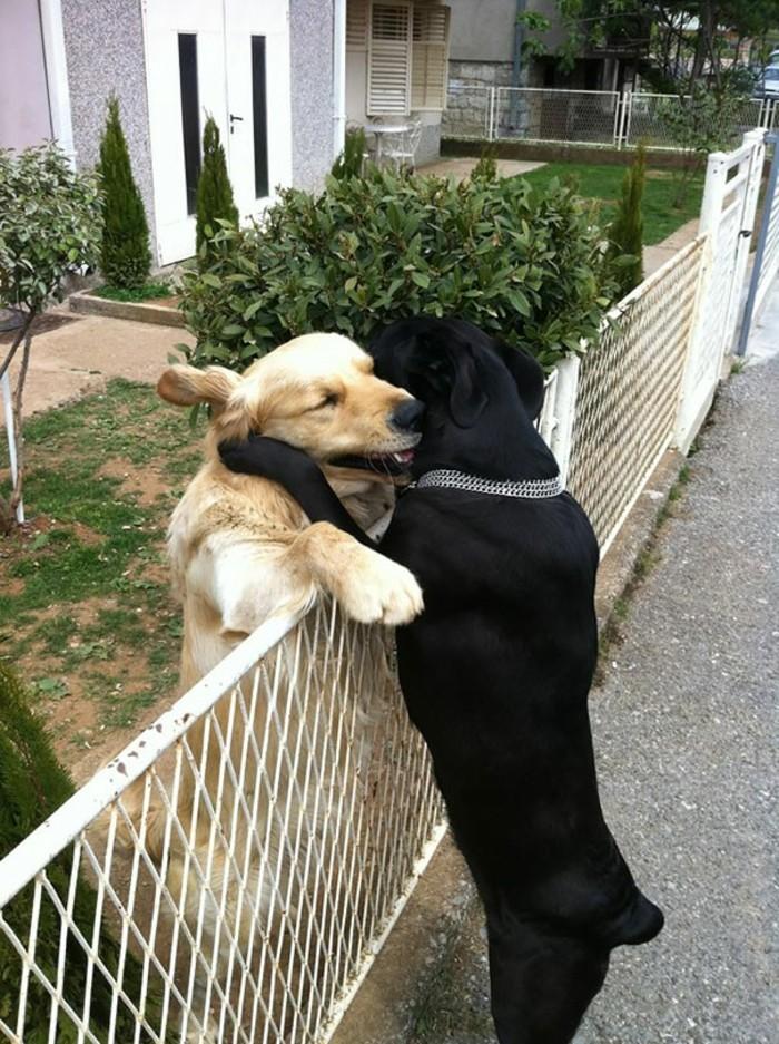 chouette-image-de-meilleures-amies-chien-blanc-et-noire