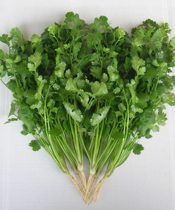 Plante Aromatique – Mettez du goût dans votre intérieur - Archzine ...