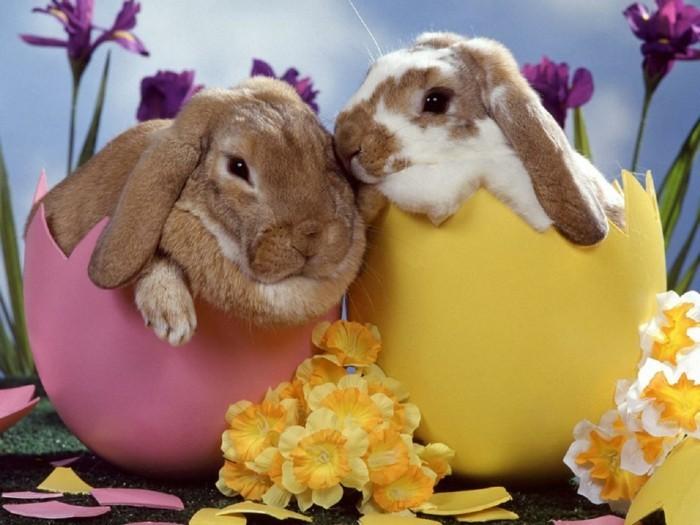 idee-deco-paques-mignonne-avec-de-vrais-lapins-photo-tres-sympa
