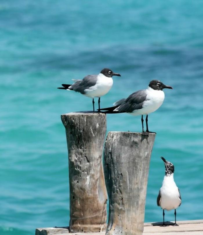 immobilier-espagne-bord-de-mer-oiseaux-bois-eau-bleu