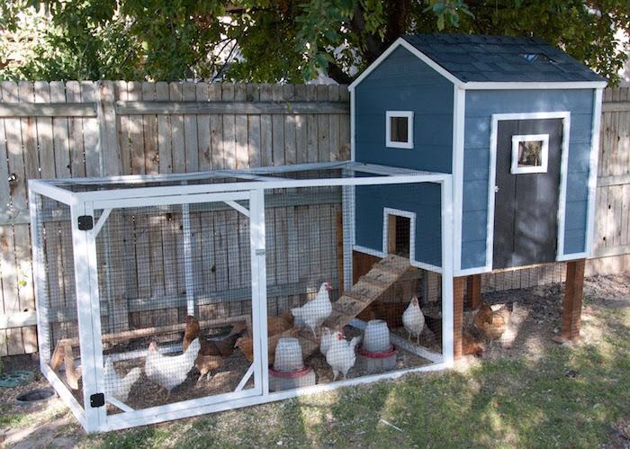 maison-poules-en-bois-avec-jardin-et-cabane