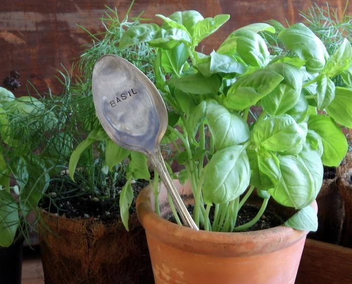 Plante aromatique mettez du go t dans votre int rieur - Kit plante aromatique interieur ...