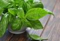 Plante Aromatique – Mettez du goût dans votre intérieur