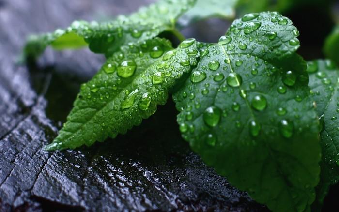 planter-de-la-menthe-aromates-aromatique-jardiniere-en-bois
