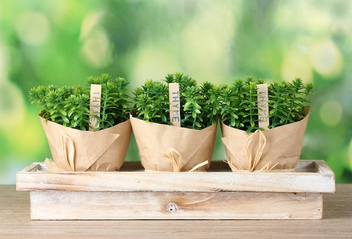 planter-du-thym-en-pepiniere-en-ligne-pepiniere-jardiniere-potager