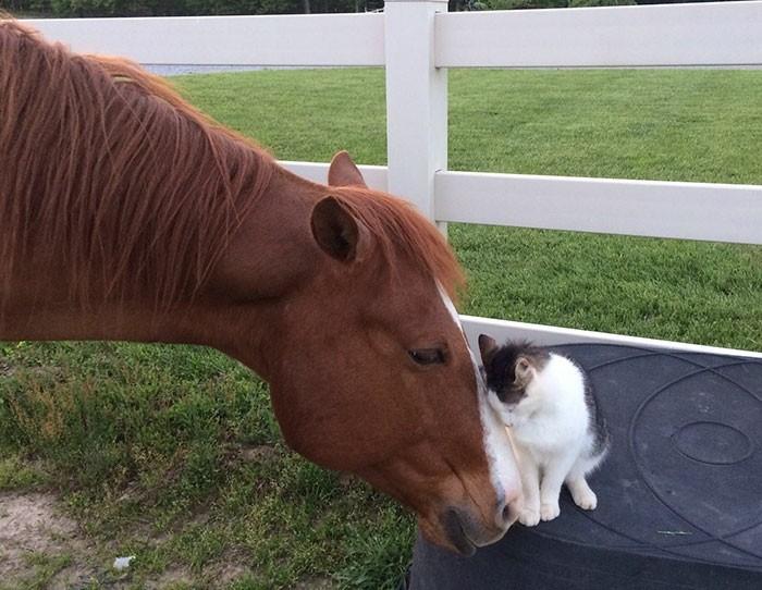 texte-pour-ma-meilleure-amie-chat-et-cheval
