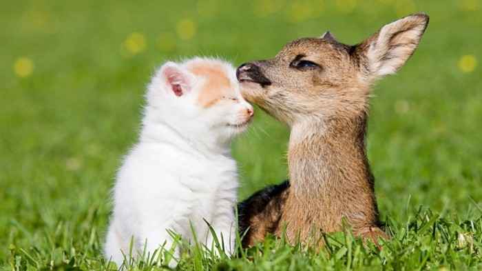 texte-pour-ma-meilleure-amie-chaton-herbe