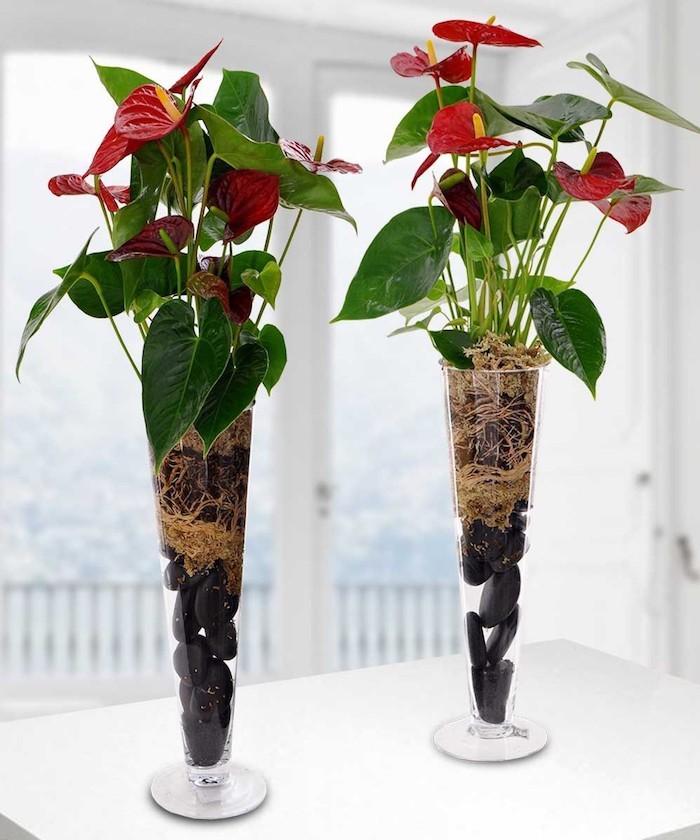 anthurium-plante-depolluante-chambre-plantes-d-interieur-depolluantes