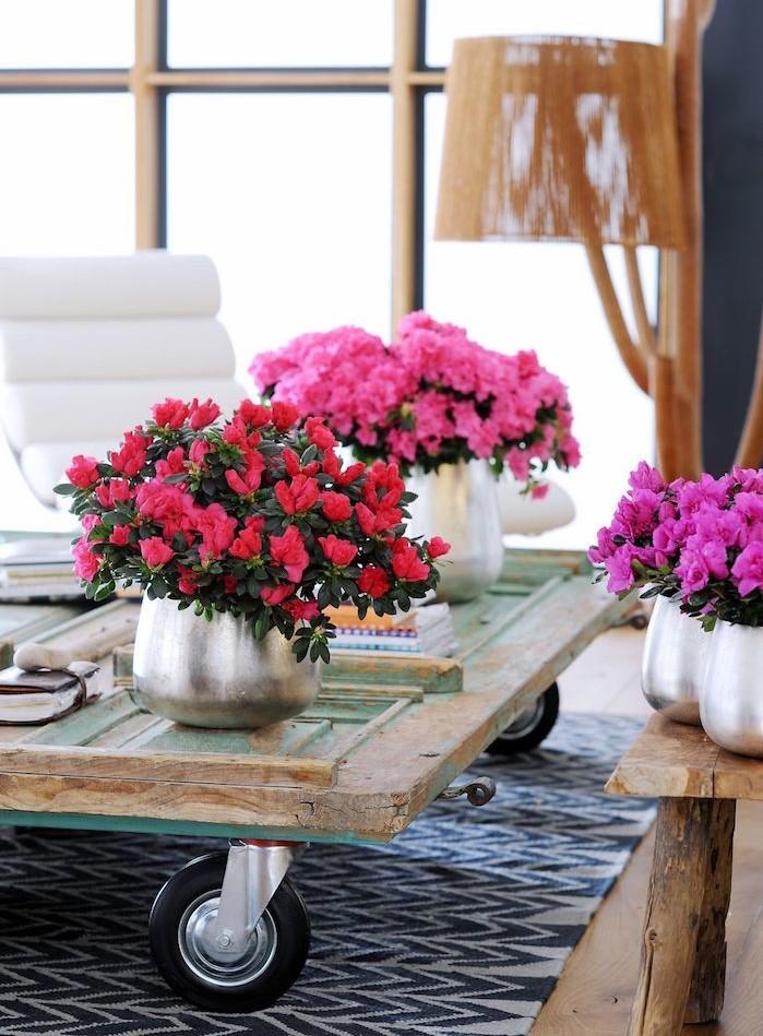 plante d polluante offrez un bol d 39 air votre int rieur. Black Bedroom Furniture Sets. Home Design Ideas