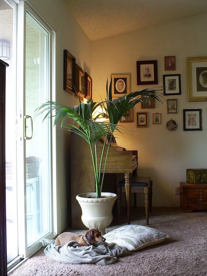 kentia-plante-assainissante-plantes-d-interieur-depolluantes-appartement