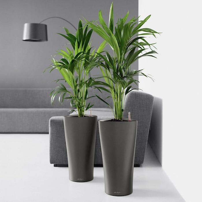 kentia-plante-assainissante-purifier-air-interieur-plantes-pour-chambre-bureau