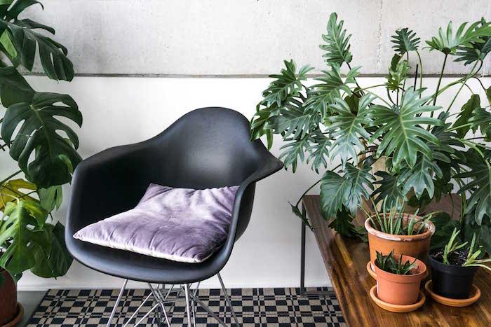 philodendron-xanadu-plante-depolluante-interieur-depolluantes-depoluante