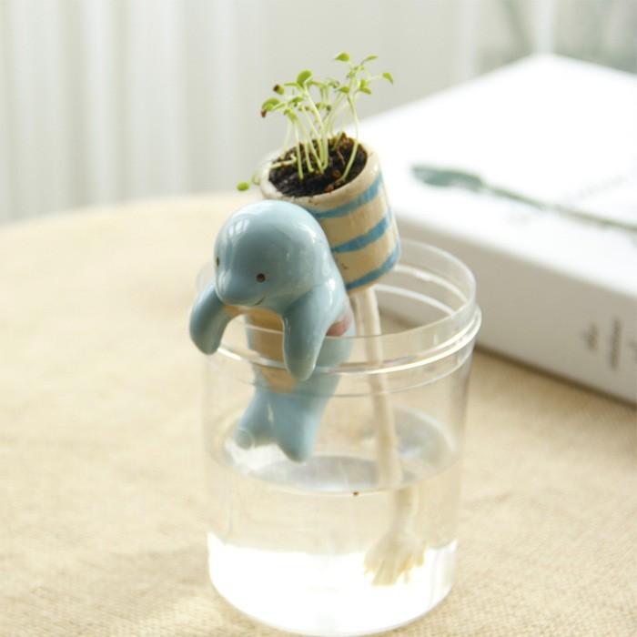 taobao-plantes-aquatiques-plante-mini-jardin-aquatique