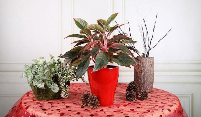 agloanema-plante-purifiante-toxiques-assainir-air-interieur-bureau
