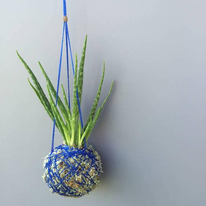 Plante Panier Suspendu : Plante succulente une le?on d ?conomie eau