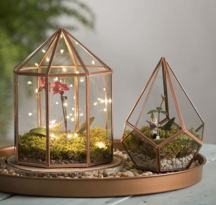 ... jardin-magnifique-pour-votre-terrarium-sympa-orchidee-lumieres-sympas