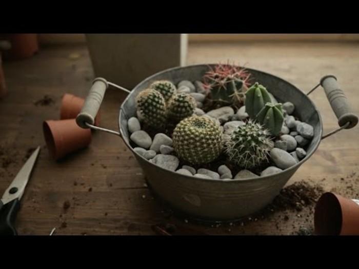 amenagement-jardin-miniature-de-cactus-idee-un-terrarium-a-faire-soi-meme