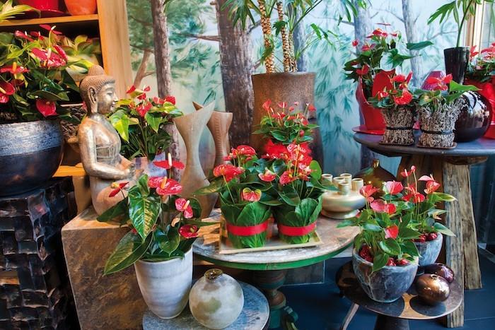 anthurium-plantes-depolluantes-plante-de-bureauassainir-maison