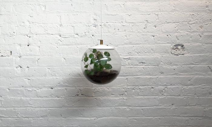 aquarium-suspendu-plantes aquatiques-terrarium