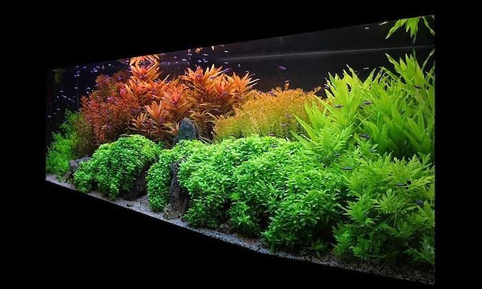 aquarium-terrarium-interieur-plantes-aquatiques