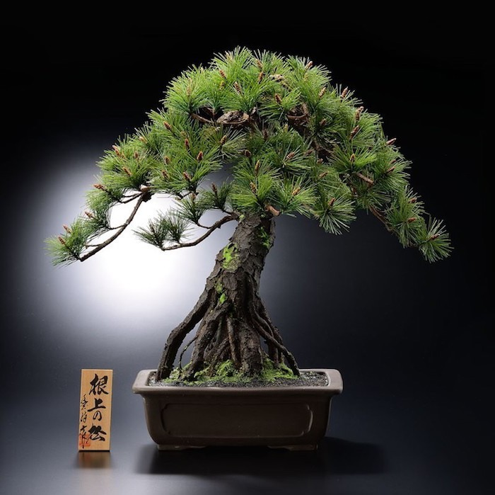 Plante artificielle de faux v g taux plus vrais que for Arbre bonsai exterieur