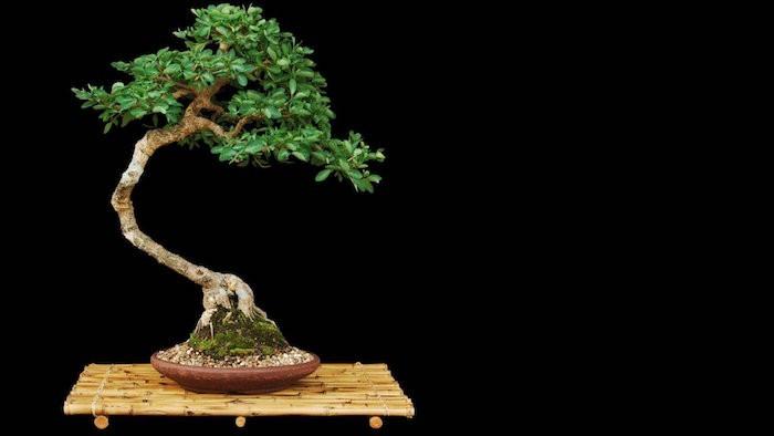 Plante artificielle de faux v g taux plus vrais que nature for Entretien bonsai interieur