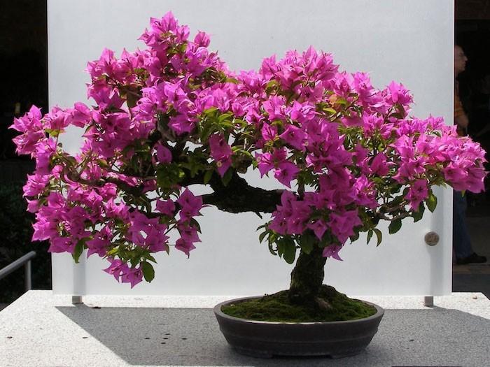 azalee-purifiante-plantes-detoxifiantes-plante-interieur-depolluante