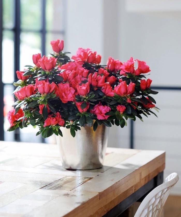 azalees-plantes-depolluantes-interieur-fleurs-rouge-rose-purifier-appartement-bureau-pollution