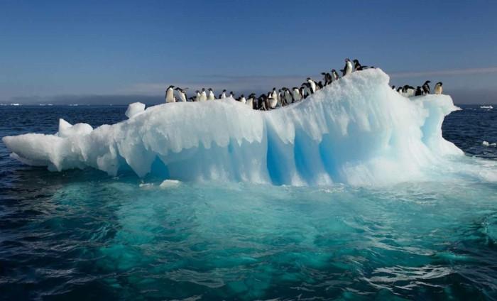 belle-photo-image-pinguin-photo-manchot-pingouins-et-manchots
