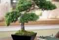 PLANTE Artificielle – De faux végétaux plus vrais que nature