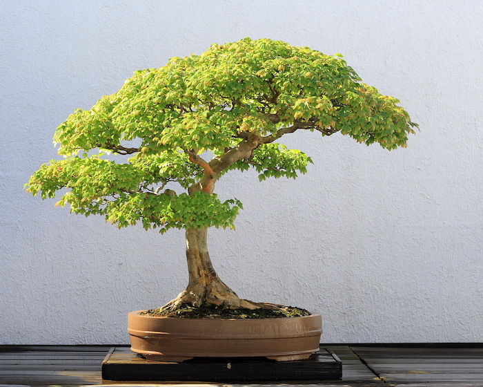 bonsai-artificiel-bonsai-artificiel-fausse-plante-artificielle-plastique-fleur-artificiel-idee-cadeau-faux-vegetal