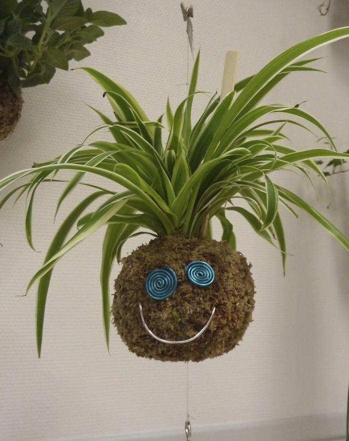 chlorophytum-plante-depolluante-assainir-l-air-chambre-bureau