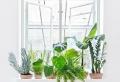 PLANTE Dépolluante – offrez un bol d'air à votre intérieur