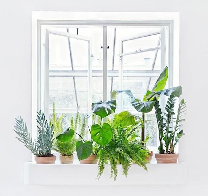 Plante d polluante offrez un bol d 39 air votre int rieur - Les plantes depolluantes purifier l air de la maison ...
