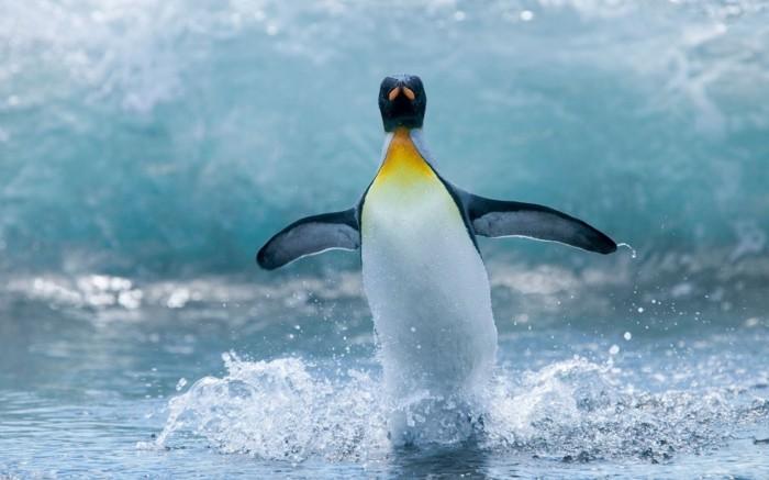 cool-photo-le-manchot-empereur-pinguin-vole-voir-la-mer-et-pinguins-en-ete