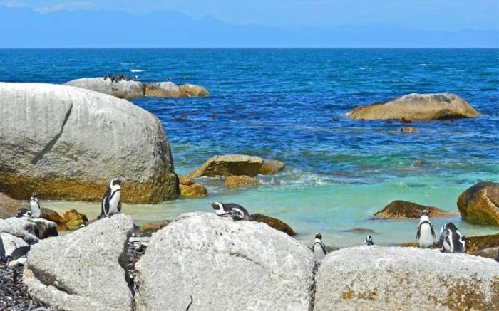 de-belle-photo-le-manchot-empereur-pinguin-vole-ete