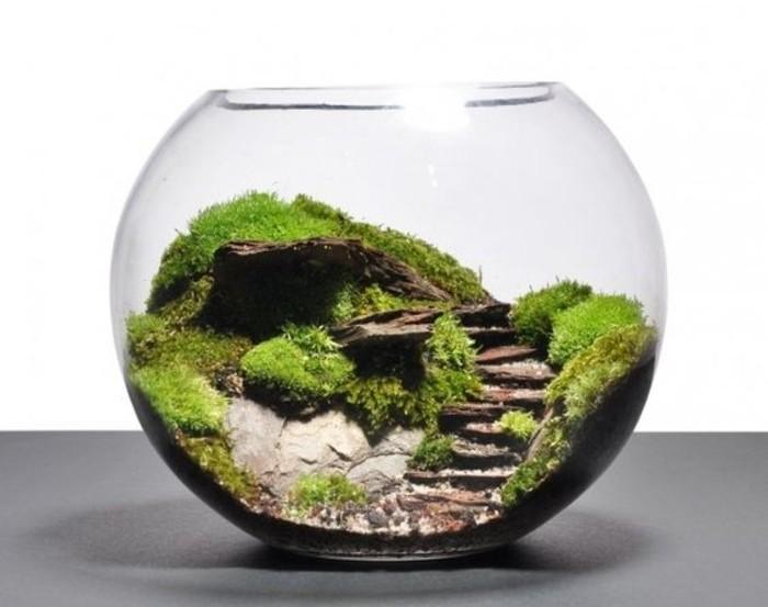 decor-terraium-tres-sympa-terrarium-dans-un-aquarium-poissons